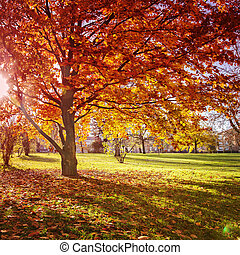Colourful autumn park