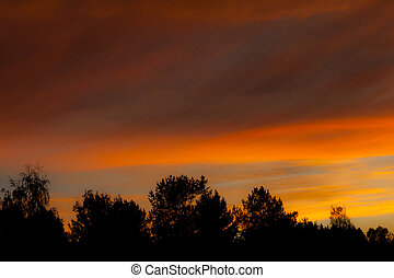 Colourful autumn sky and forest silhouette at sunset.