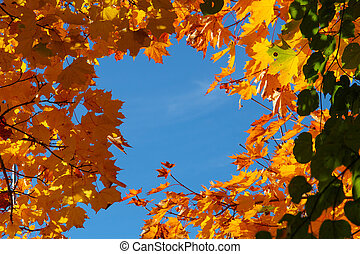 Colourful autumn trees against blue sky