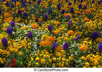Colourful Bed of Flowers in East Grinstead