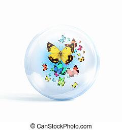 colourful butterflies