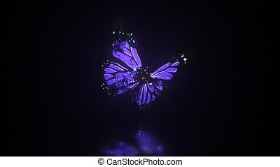 colourful butterflys on a black background