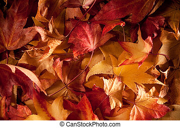 leafs in autumn