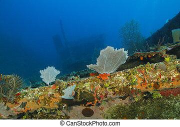 Colourful Coral Encrusted Shipwreck - Roatan, Honduras