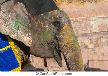 Colourful elephant in Jaipur, Rajasthan, India