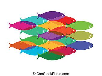 Colourful Fish Shoal
