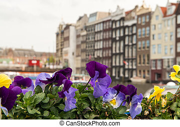 Colourful Flowers and Amsterdam typical Buildings, Netherlands