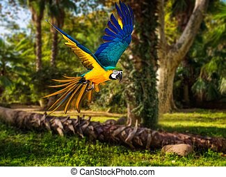 Colourful flying parrot in tropical landscape