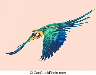 Colourful flying parrot toned