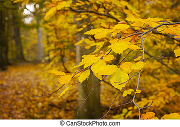 Colourful forest background