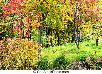 Colourful forest in Autumn