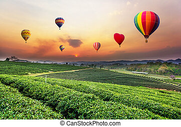 Colourful hot-air balloons flying over tea plantation landscape at sunset.
