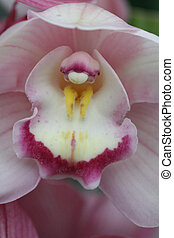 orchid - colourful orchid in spectacular bloom