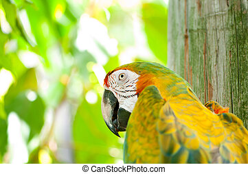 Colourful parrot bird sitting on the perch