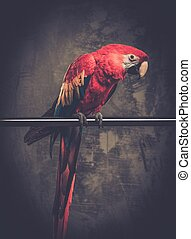 Colourful parrot sitting on a perch