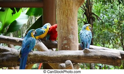 Colourful parrots in the zoo
