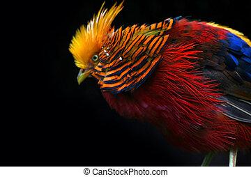 colourful ptáci