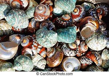 Colourful seashells.
