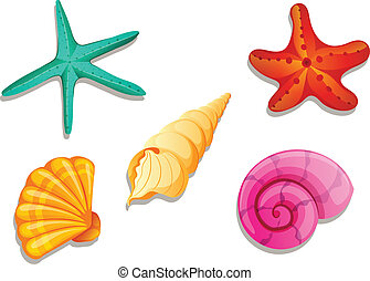 Colourful seashells - Illustration of the colourful ...