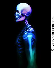 Colourful Skeleton - X rayed skeleton that has got a mix of...
