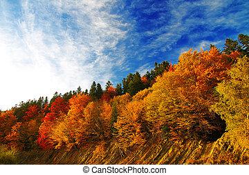 colourfull autumn forest