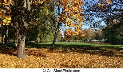 Colourfull Fall Park - Colourfull Trees in Fall Park