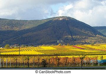 colourfull, wineyards