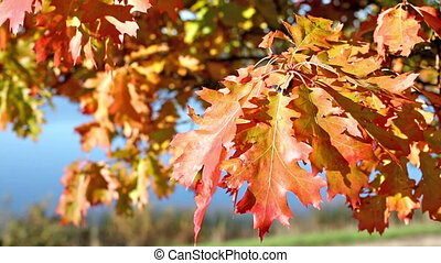 Colours of the changing seasons