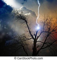 colpito, albero, lampo