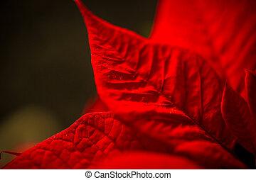 colpo, macro, sopra, struttura, permesso, sfondo nero, rosso