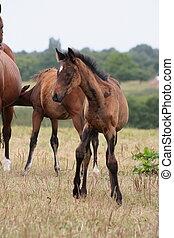 Colt - Horse
