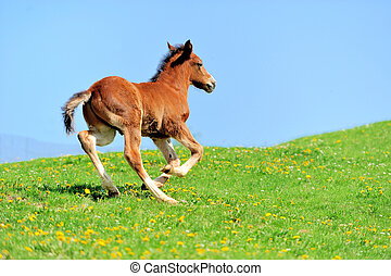 Colt on a meadow in summer day