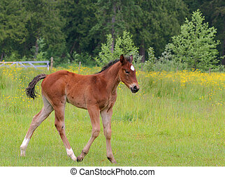 Young colt in pasture