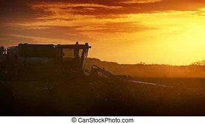 coltivare, in, tramonto