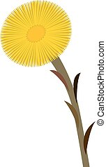 Coltsfoot clip art isolated, vector