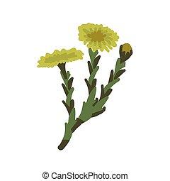 Coltsfoot flower simple vector illustration