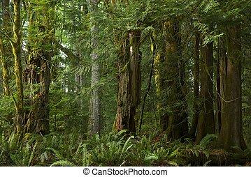 columbia británica, bosque