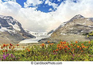 columbia, icefield, e, selvatico, fiori arancia, in, jasper parco nazionale, alberta, canada