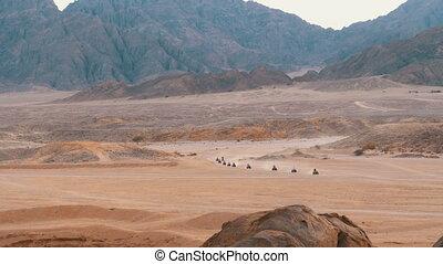 Column of a Quad Bike Rides through the Desert in Egypt on...