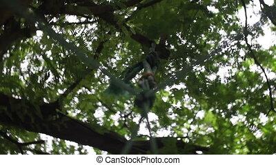 columpio, girar, árboles, cielo, mirada