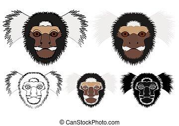 común, mono, mono tití, cara, vista.