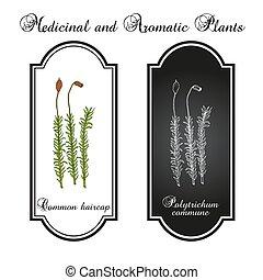 común, musgo, plan, medicinal, haircap, comuna, polytrichum