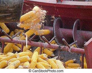 comb binding corn 3