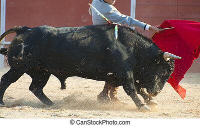 combat, taureau, image, depuis, spain., noir, taureau