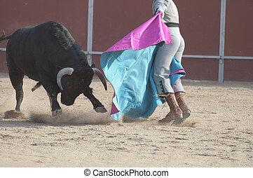 combat, taureau