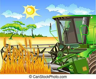 combinar, campo, trigo