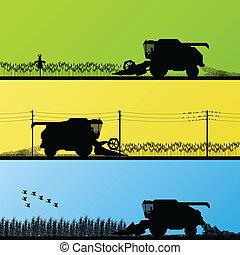 combinar, cosechar, cosecha, en, grano, campos, vector
