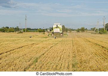 combinar, máquina, campo agricultura, cegonha, pássaro