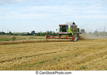 combinar, trator, colheita, trigo, campo agricultura