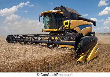 combinare, raccolti, frumento, su, uno, campo, in,...